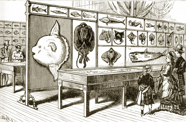fish_exhibit_1876_1.jpg