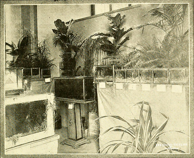 aquariumbulletin1917brook_0005_wm_s.jpg